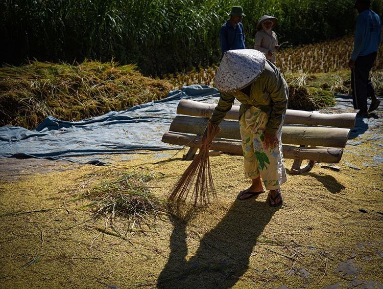 Petani tradisional di desa wisata Tetebatu Lombok Timur, sumber ig @die_belel