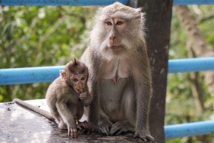 Hutan Monyet Pusuk, src youtube