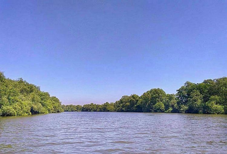 Foto dari laut keindahan mangrove Wonorejo Rungkut, ig neslya_sn