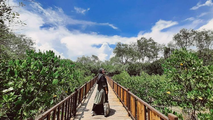 Foto keindahan hutan mangrove Wonorejo, ig ayu_afrill