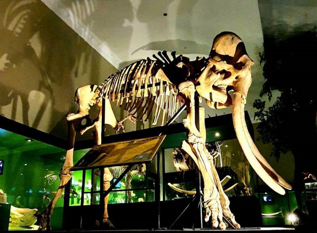 Salah satu contoh fosil dalam Galeri Fosil Museum satwa, Sumber ; Instagram